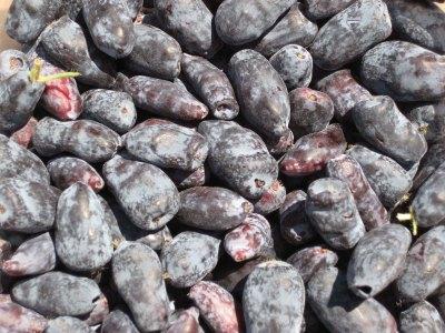Hascap berries