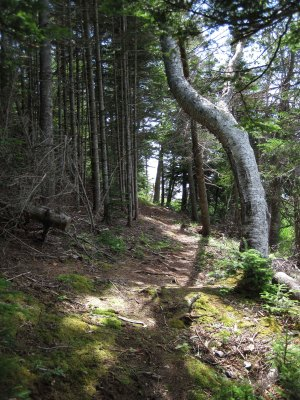 Hiking trail on the island sheltering Baddeck Harbour.