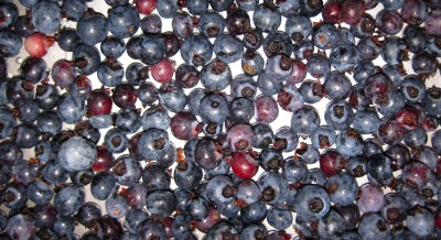 Berries19