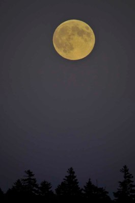 Autumn full moon (photo by M. Hobart).